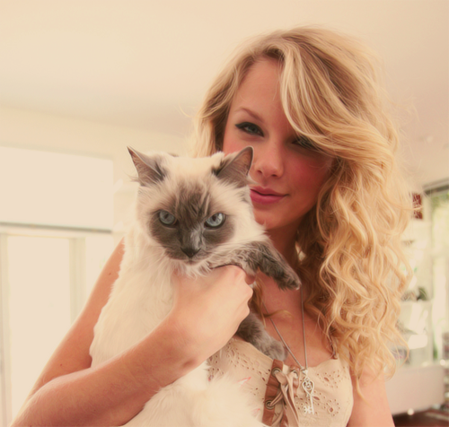 Fans Signs & Giant Cats: All Part of A Taylor Swift Concert