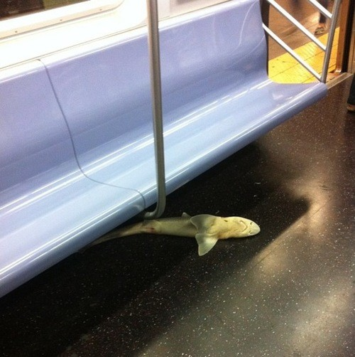 New York's Subway Shark Is No Longer A Mystery