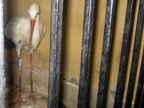 Pop Of Weird: Citizen's Arrest Lands Bird Behind Bars