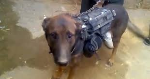 Dog Becomes Prisoner Of War