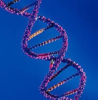 U.S. Study Yields Evidence Towards Genetic Link To Homosexuality