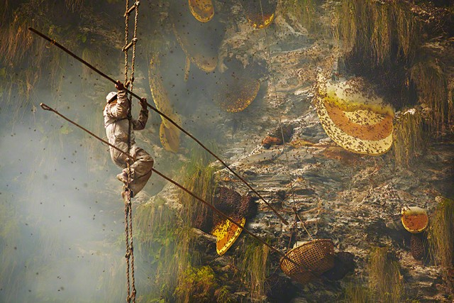 Andrew Newey Captures Striking Images Of The Ancient Art Of Honey Hunting In Central Nepal