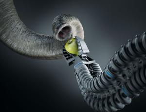 Robotic Elephant Trunk Taught Motor Skills