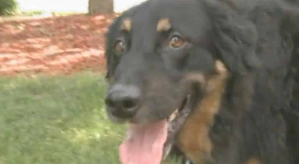 Woman's Dog Coughs Up Missing Wedding Ring Five Years Later