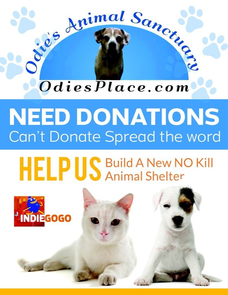 Fundraising For Animals: New IndiGoGo Campaign Requests Help Building A No-Kill Animal Shelter