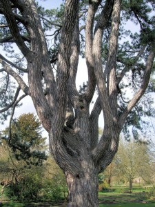 Inspiration Take Down: Tolkien's Favourite Tree Set To Be Cut Down