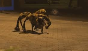 Spider-Dog Scares People In Hilarious Prank | Spider-dog