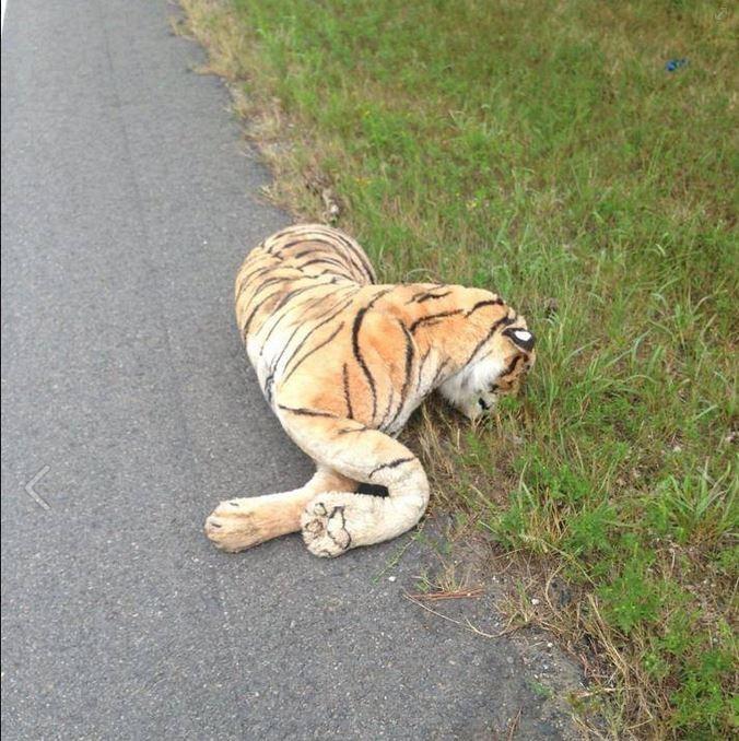 Dead Tiger Stops Traffic...Except it Wasn't Dead...and Wasn't a Real Tiger | Dead Tiger