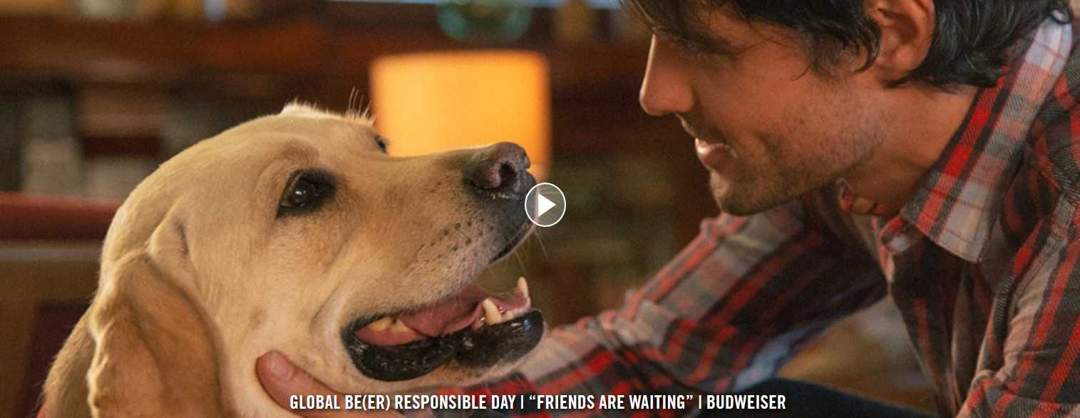 Budweiser Releases Adorably Sad PSA About Drinking & Driving | Budweiser
