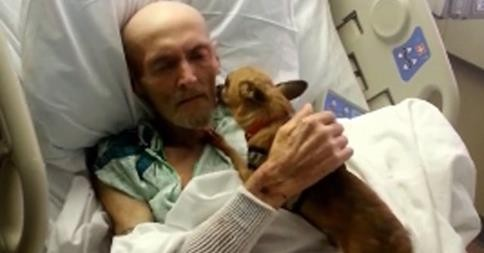 Hospital Bends Its Rules, Allows Dying Man Reunion With His Dog | hospital