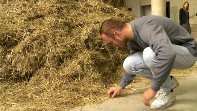 Performance Artist Sven Sachsalber Attempts To Find Needle In Haystack | Sven Sachsalber