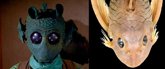 Scientists Name Catfish After Star Wars Character Greedo | Greedo