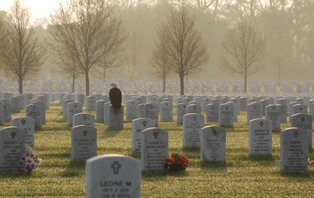 Photograph Of Eagle On Headstone Goes Viral | Eagle