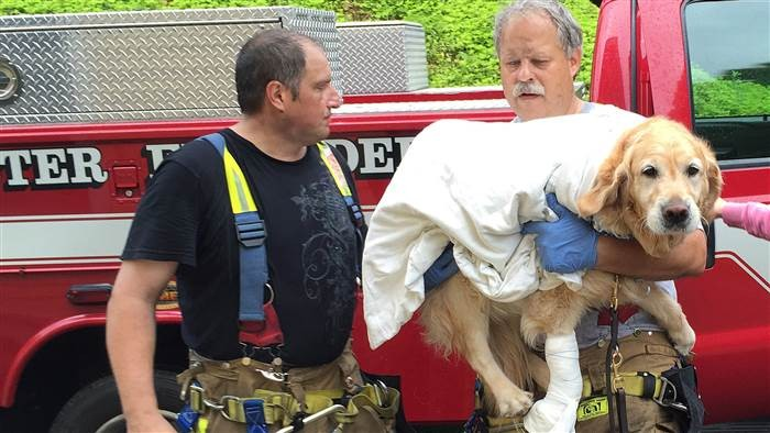 Service Dog Breaks Leg Saving Blind Owner   Service Dog