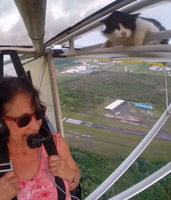 Cat Discovered Hanging From Small Airplane Mid-Flight | Airplane