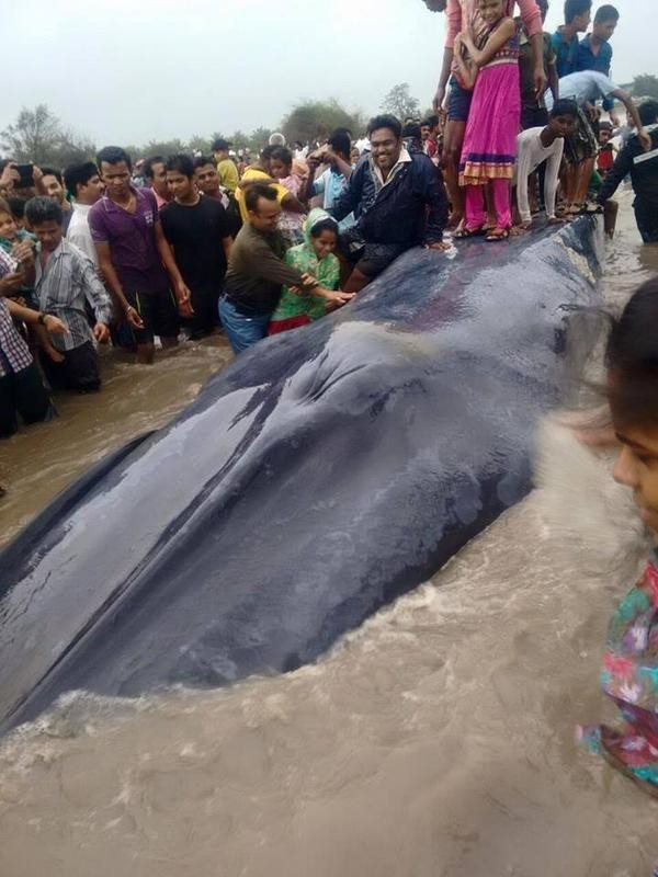 Twitter Defends Beached Blue Whale Mistreated In India | blue whale