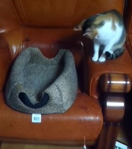 Watch: Cat Relentlessly Teases Fellow Feline With Toy | Cat