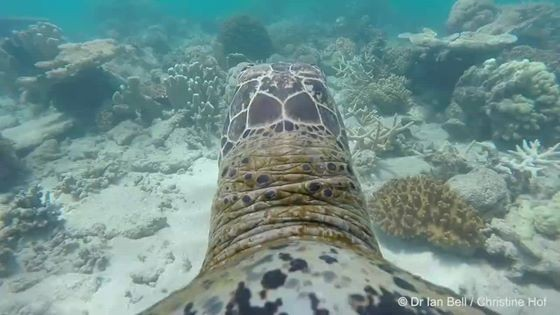 Here's What The Great Barrier Reef Looks Like To A Turtle | Great Barrier Reef