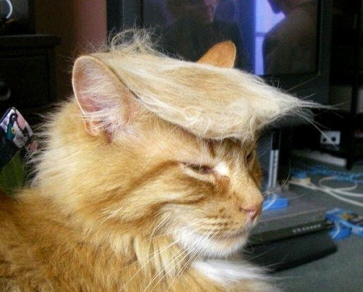 #TrumpYourCat Is Social Media's Latest Hysterical Trend | trump