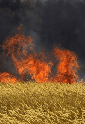 Hungary Destroys 1k Acre Of GMO Monsanto Maize | GMO