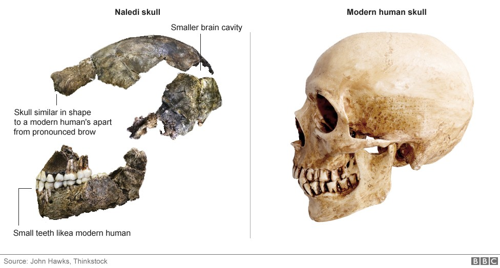 Team Of Female Scientists Discover New Primitive Human Species | Species
