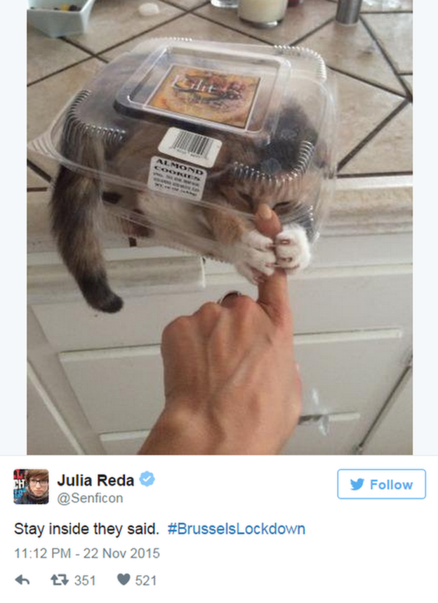 Belgians Respond To Lockdown With The Best Cat Memes | cat memes
