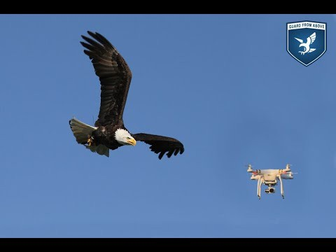 The Art of Falconry Used To Combat Modern Technology | Falconry