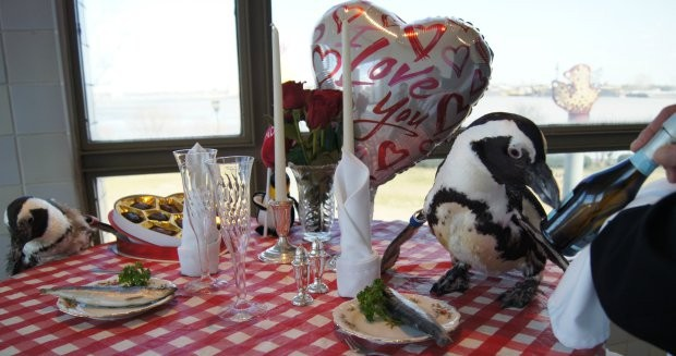 Penguin Couple Celebrates Their 22nd Valentine's Day Together | Valentine's Day