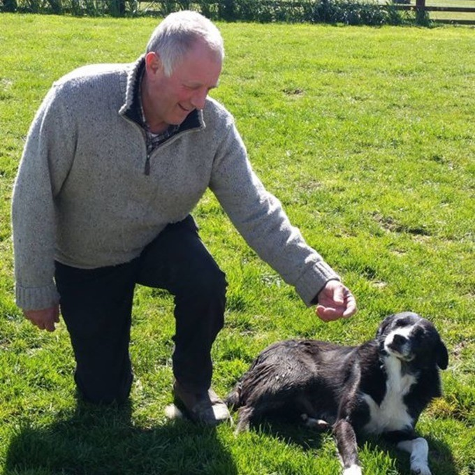 Sheepdog Travels 240 Miles To Return Home | Sheepdog