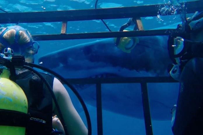 47 Meters Down: First Trailer Talk | 47 Meters Down