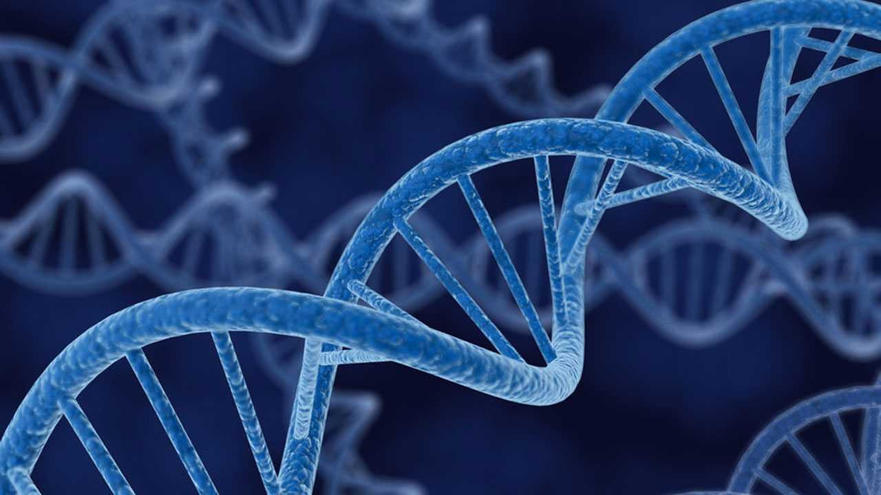 Scientists Attempt To Edit DNA | edit