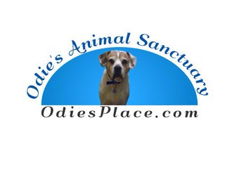 Courtesy of Odie's Animal Sanctuary